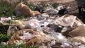 Plastic Bags a Blight on Cambodia's Landscape