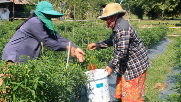 Cambodia's Farmers Hard Hit by COVID Lockdown
