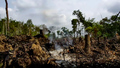 Illegal Logging and Corruption Threaten Cambodia's Last Intact Forest