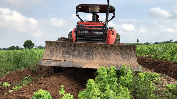 Farmers in Cambodia's Kandal Province Destroy Their Crops During COVID-19 Lockdown