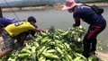 Myanmar Farmers Dump Crops After China Reduces Cross-Border Traffic