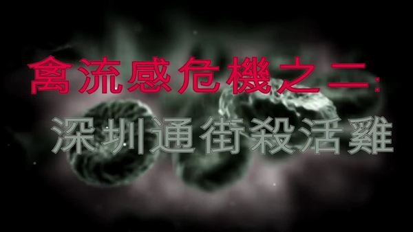 禽流感危機之二:深圳通街殺活雞