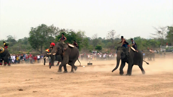 Vietnam's Elephant Race Draws Cheers, Critics