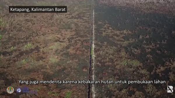 Induk dan Bayi Orangutan Diselamatkan dari Kebakaran Hutan