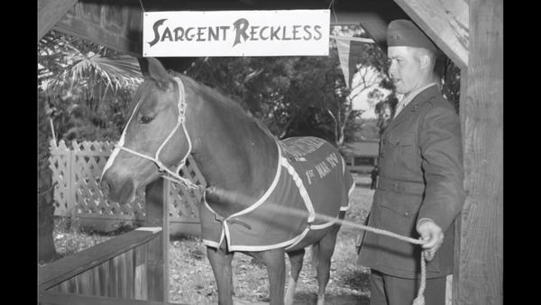 Sgt. Reckless, A Forgotten Hero
