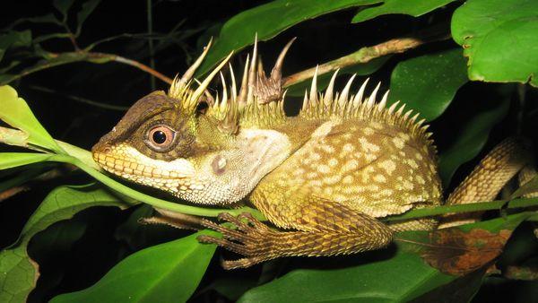 Rainbow Snake, Tiny Frog Among New Mekong Species