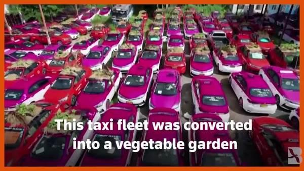 Thais Turn Idle Taxi-Garage into Veggie Garden