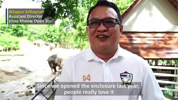 'Elephant Pool' Makes Splash at Zoo in Thailand
