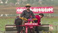 Rice Planting Season Begins in North Korea