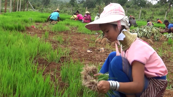 """Myanmar's """"Neck-Coil"""" Women Back in the Village After Coronavirus Shuts Down Tourism in Thailand"""