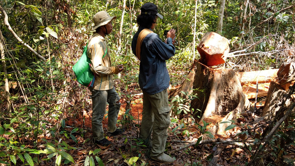 Young Environmentalists Document Illegal Logging in Cambodia