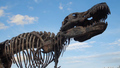 China's Building Boom Uncovers Dinosaur Fossils