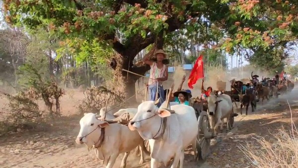 Myanmar Farmers Parade on Ox Carts Against Coup