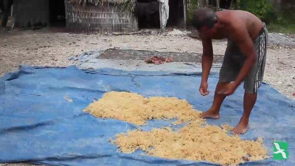 Perubahan Iklim Rusak Rumput Laut Nusa Penida