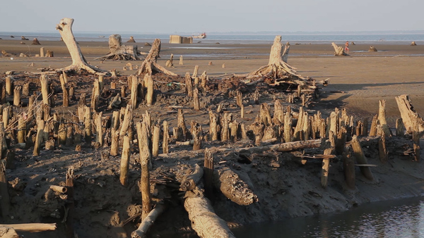 Reforestation Offers Hope for Myanmar's Sinking Island