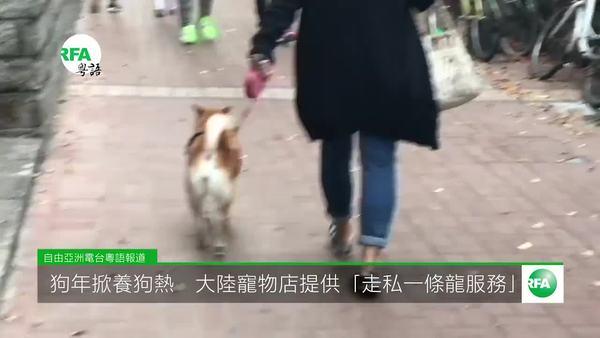 狗年掀养狗热 大陆宠物店提供「走私一条龙服务」