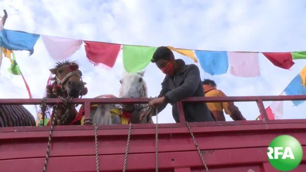 Tradition Faces Modernity at Tibetan Horse Festival