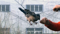 Poachers Kill Migrating Birds in China