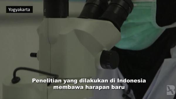 Penelitian di Indonesia Beri Harapan untuk Perangi Demam Berdarah