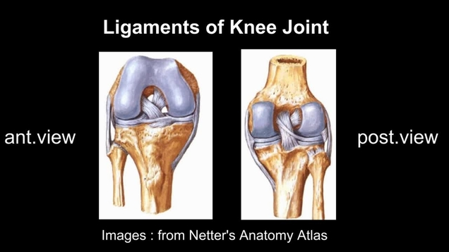 Video gallery american journal of physical medicine rehabilitation video thumbnail for sonographic examination of knee ligaments ccuart Image collections