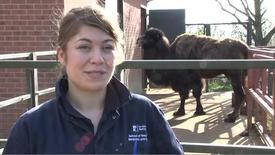 Anna Briggs - BVM BVS with BVMed Sci Veterinary Medicine and Science