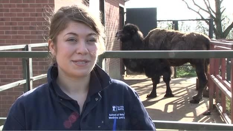 Thumbnail for entry Anna Briggs - BVM BVS with BVMed Sci Veterinary Medicine and Science