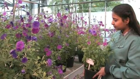 Thumbnail for entry Bhavya Dhanaraj - MSc Plant Genetic Manipulation