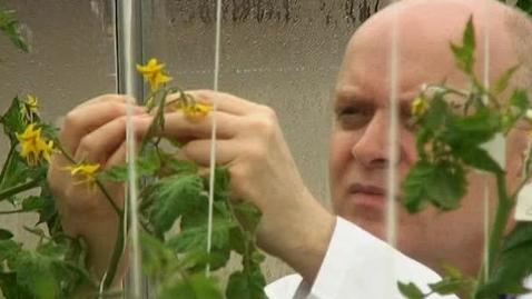 Thumbnail for entry Nottingham plays key role in sequencing the tomato genome