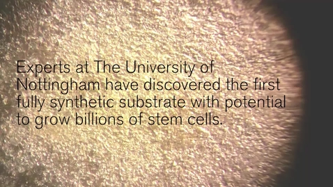 Thumbnail for entry New material forges the way for 'stem cell factories' of the future