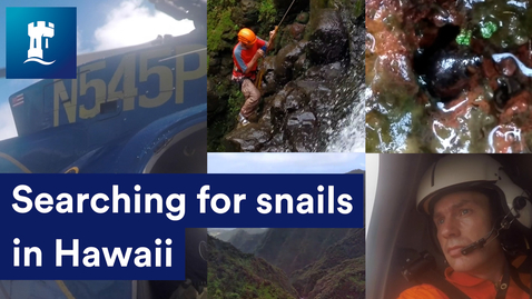 Thumbnail for entry Searching for snails in Hawaii