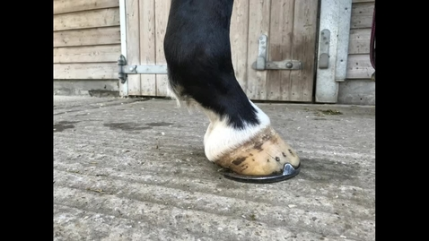 Thumbnail for entry Lameness evaluation: Static assessment