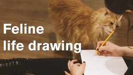 Thumbnail for entry Feline life drawing at the Kitty Cafe