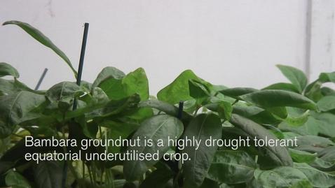 Thumbnail for entry Talk on Bambara Groundnut impresses at UK PlantSci 2014