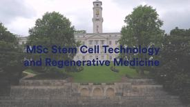 Thumbnail for entry MSc Stem Cell Technology