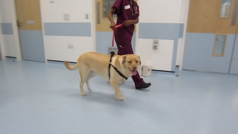 Thumbnail for entry Gait analysis of the dog: Clip 4