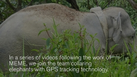 GPS tracking of Malaysian elephants