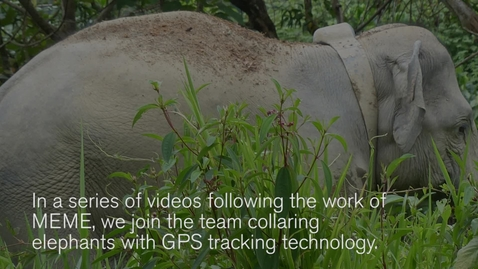 Thumbnail for entry GPS tracking of Malaysian elephants