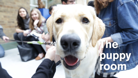 Thumbnail for entry LawSoc Puppy Room 2016