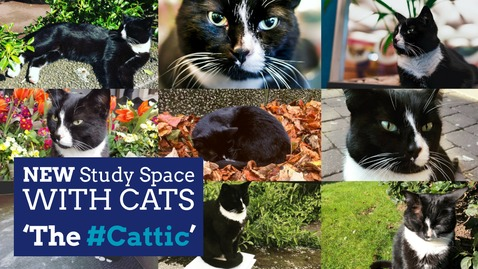 The #Cattic - Coming Soon to Hallward Library