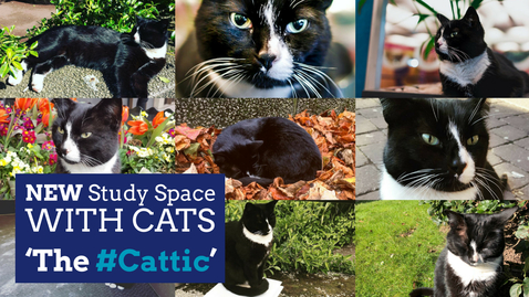 Thumbnail for entry The #Cattic - Coming Soon to Hallward Library