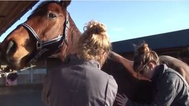 Lecture: why do horses get colic?