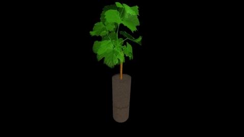Thumbnail for entry UoN The Hidden Half: Grapevine