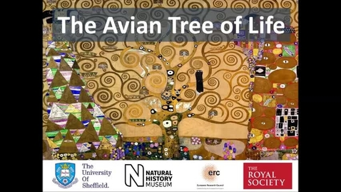 Thumbnail for entry Avian Tree of Life