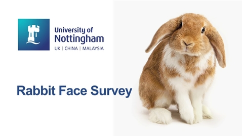 Thumbnail for entry Rabbit Face survey asks how cute are these bunnies?