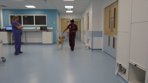 Thumbnail for entry Gait analysis of the dog: Clip 5