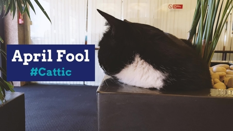 Thumbnail for entry April Fool - #Cattic