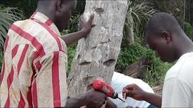 Detecting Diseases in Coconuts