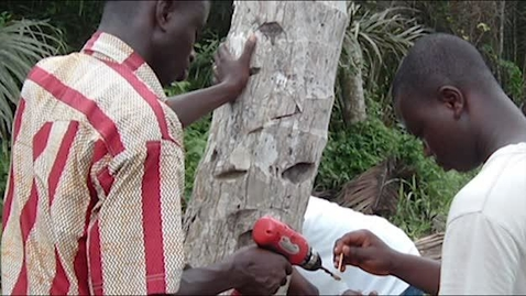 Thumbnail for entry Detecting Diseases in Coconuts