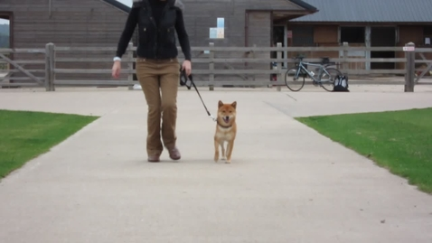 Thumbnail for entry Gait analysis of the dog: Clip 2