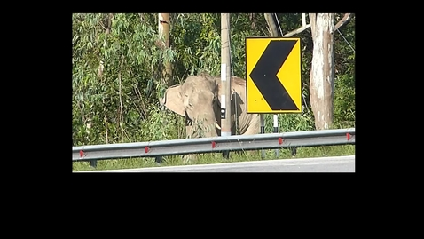 Thumbnail for entry Why did the elephant cross the road? In Malaysia they are trying to find the answer.